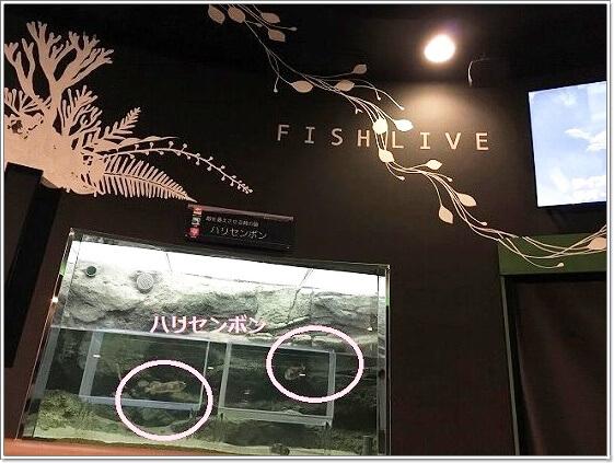 須磨水のお魚ライブ