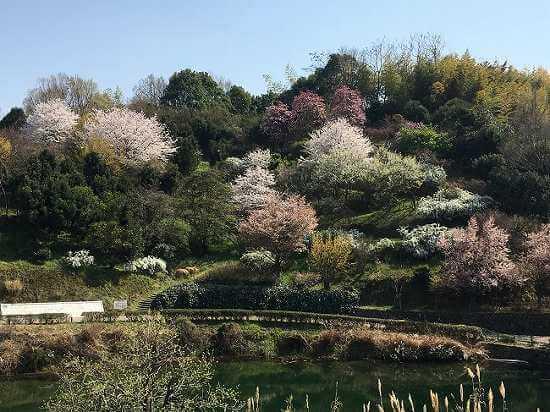 和歌山海南市「わんぱく公園」の遊具、ランチ、駐車場についてのご紹介