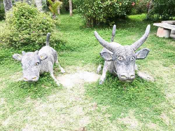 西表島1日ツアーで子供とマングローブクルーズと水牛で満喫!
