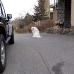 春休み家族旅行で大山レークホテルに宿泊。看板犬のガイナ君に会う