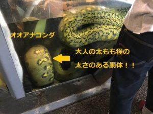 怖いけど見てみたい!巨大蛇アナコンダが見れる須磨海浜水族園