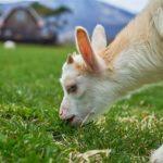 アクセス抜群北海道『むらかみ牧場』で酪農体験を楽しんで来ました。