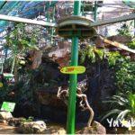ケアンズ『ワイルドライフドーム』でコアラを抱っこしてトカゲにタッチ