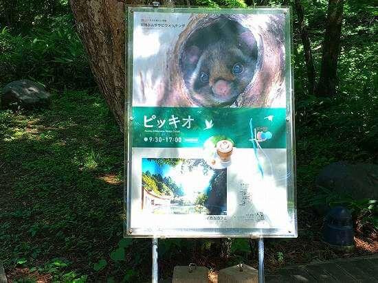 軽井沢「ピッキオ」ネイチャーウォッチングに参加。カエル捕獲に大興奮