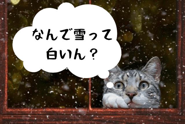 雪をみる猫