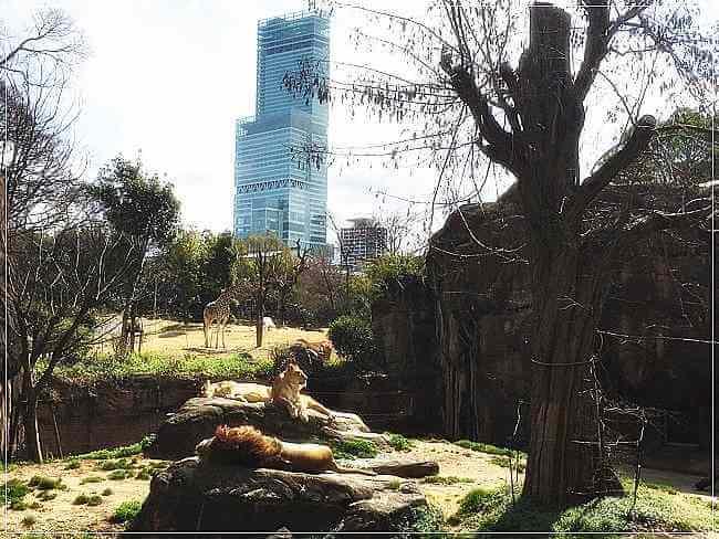 ライオンの後ろにはあべのハルカスが