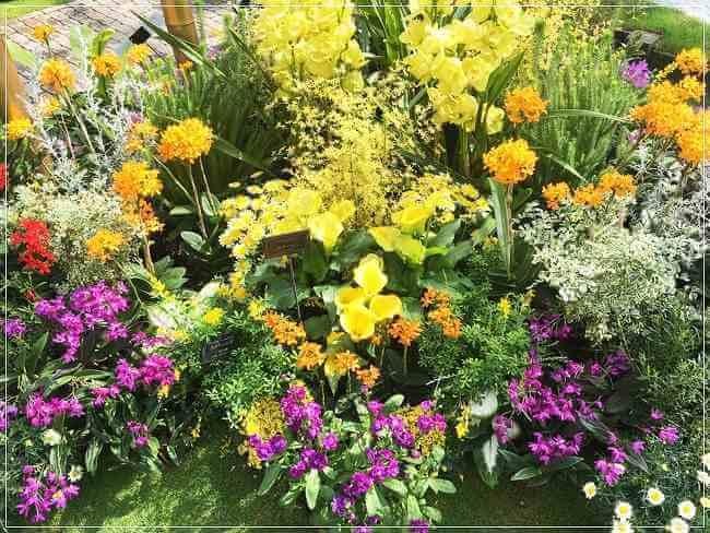 【奇跡の星の植物館】絵になる美しさ!アクセス・ランチなどご紹介